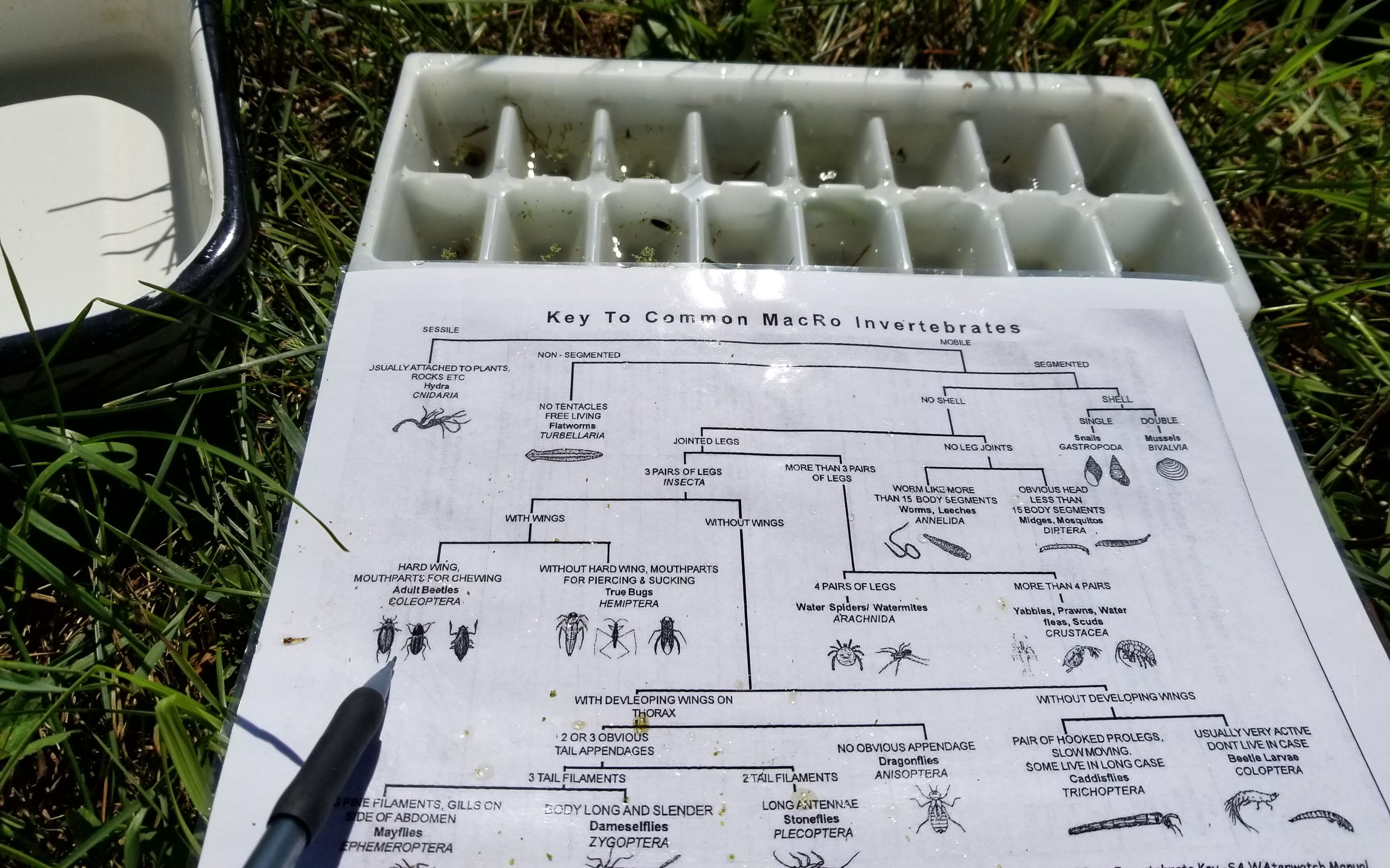 Worksheet for sorting different invertebrates into trays to gain a sense of the diversity in one of the ponds in Lux Arbor