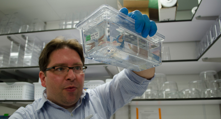 Ingo Braasch holding an aquarium housing zebra fish
