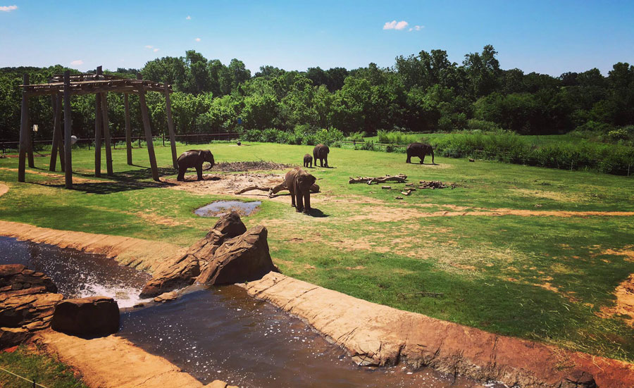 Outdoor elephant exhibit at Oklahoma City Zoo