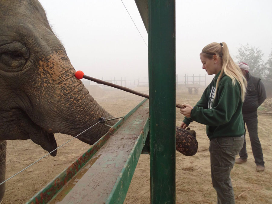 Rachel target training an elephant in India