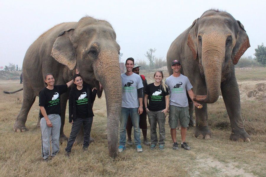 Rachel Emory and team members standing by elephants in India