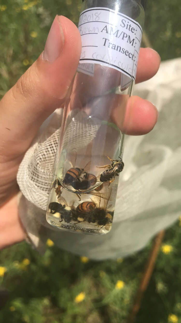 Bee samples in a glass vial.