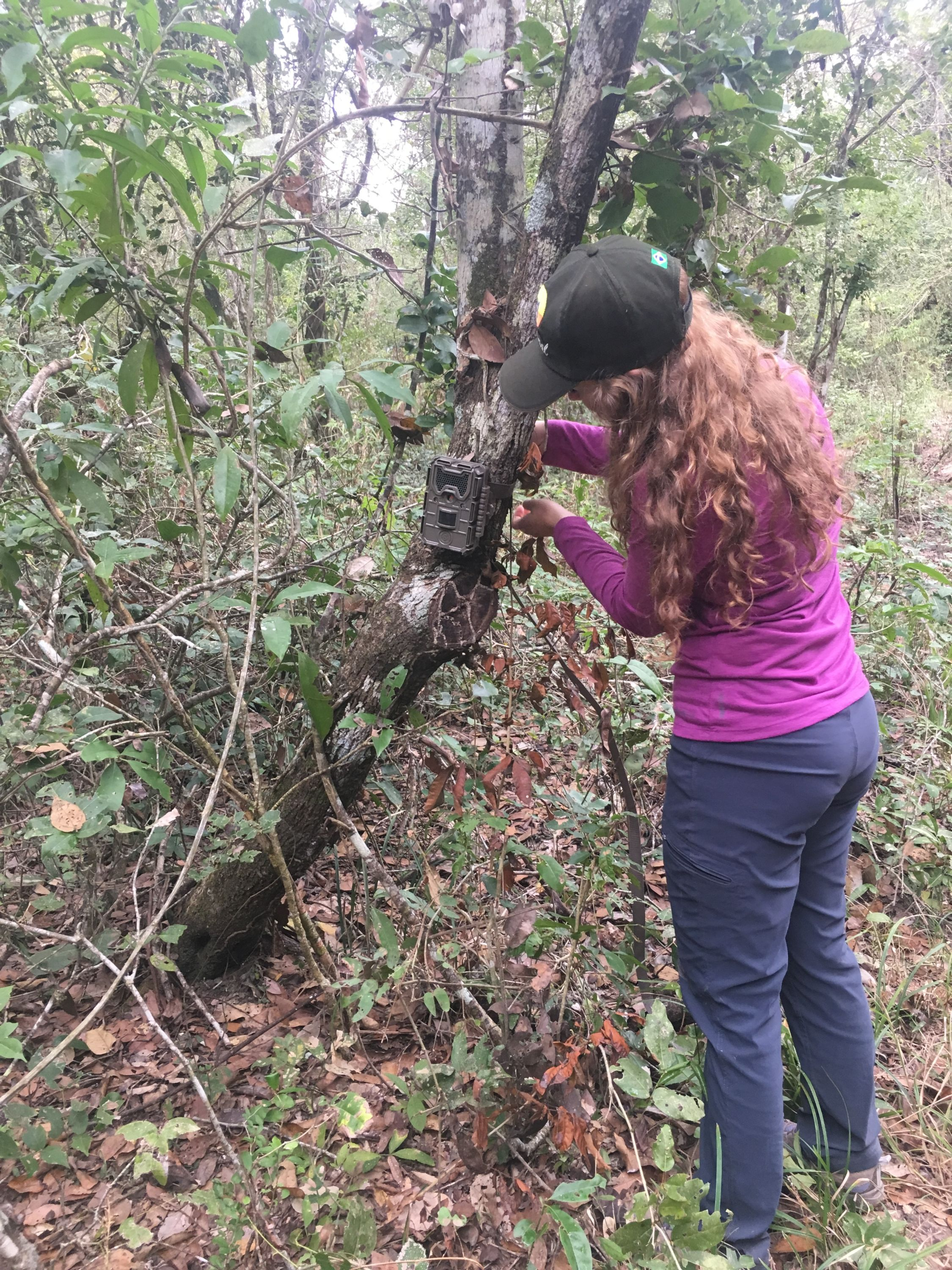 Lauren checking a camera trap.