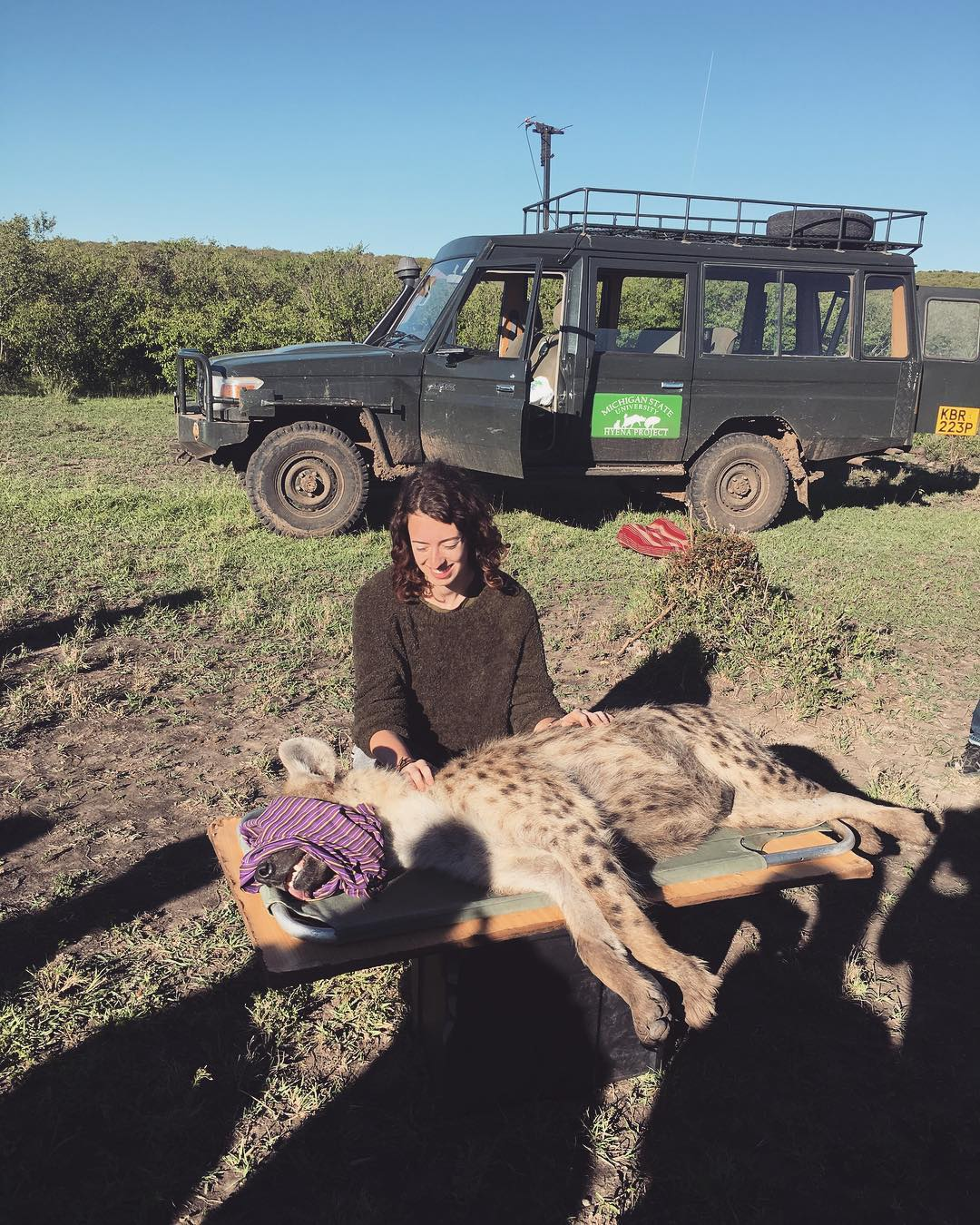 Paige Barnes kneeling next to an anesthetized hyena in Kenya.