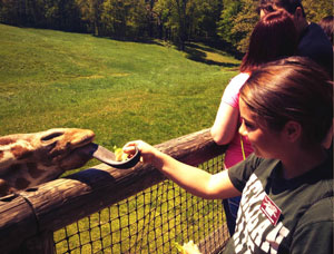 Kalee Vannest feeds a giraffe during her practicum at Binder Park Zoo.