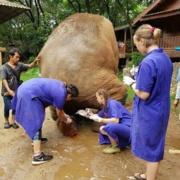 Chelsea Bandy Travels to Thailand and Australia to Work with Elephants and Wildlife